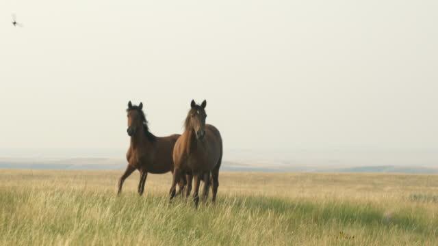 vídeos de stock, filmes e b-roll de cavalos que pastam na verde pasto - cavalo