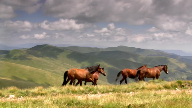 Horses grazing in  mountains video