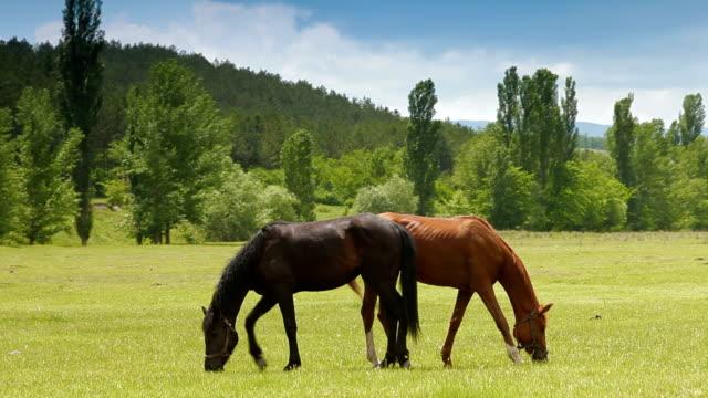 馬の牧草地に放牧地 - 牧畜場点の映像素材/bロール
