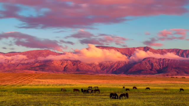 Horses grazing on the field in the mountains Timelapse - Mountains Tian Shan in Republic of Kazahkstan kazakhstan stock videos & royalty-free footage