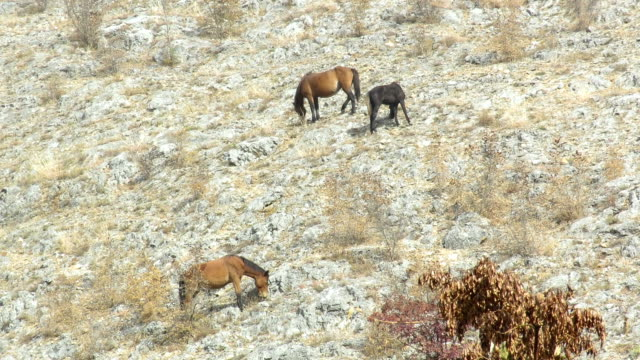Horses grazing on the opposite side of hill Horses grazing on the opposite side of hill - peaceful scene mustang wild horse stock videos & royalty-free footage