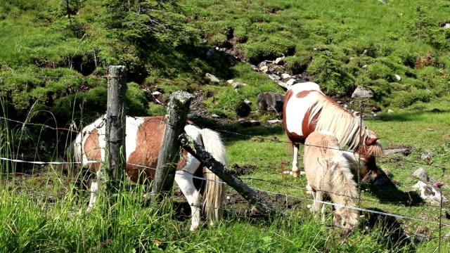 Horses grazing video
