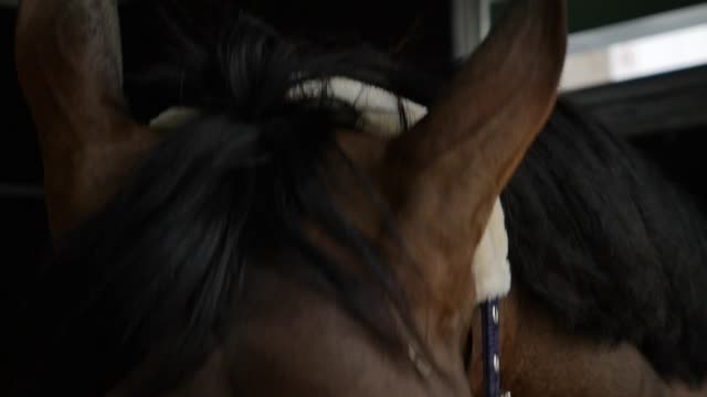 Horse's head The horse rides on the ground cultivated land stock videos & royalty-free footage