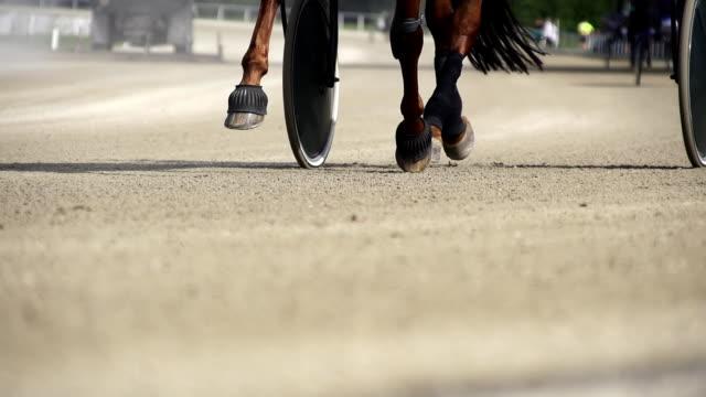 hd-super langsam mo: horse's hoofs auf die rennstrecke - pferderennen stock-videos und b-roll-filmmaterial