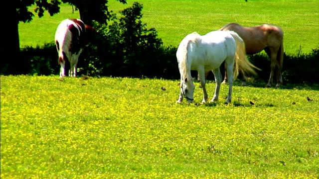 cavalli in campo - cavalla video stock e b–roll