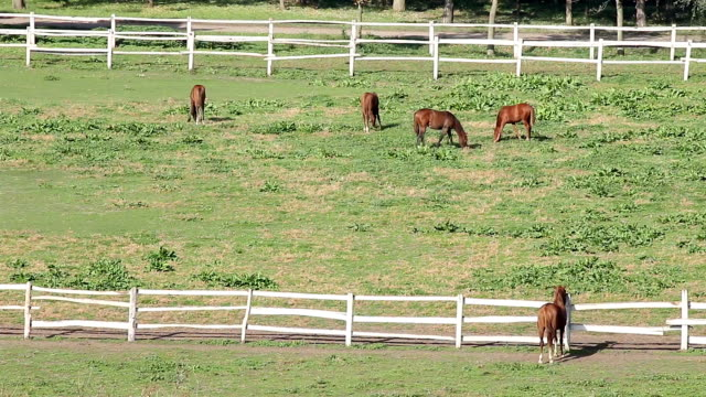 horses in corral country landscape horses in corral country landscape corral stock videos & royalty-free footage