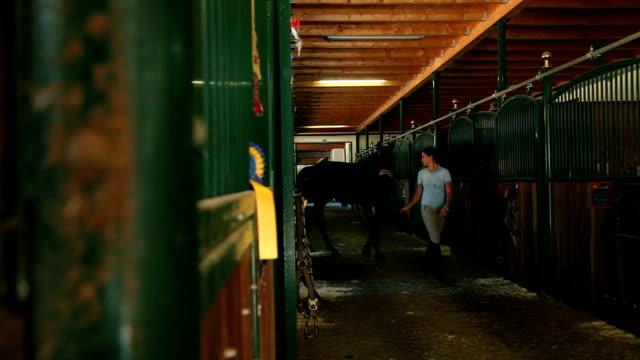 HD MACRO Horses In Stall Video