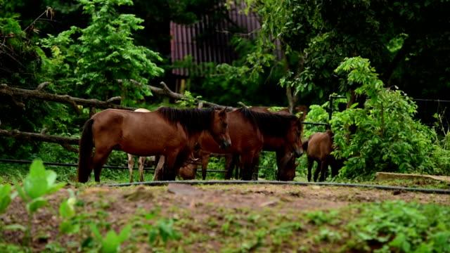 horses in the farm - zachowanie zwierzęcia filmów i materiałów b-roll