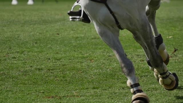 hästens ben - hästhoppning bildbanksvideor och videomaterial från bakom kulisserna