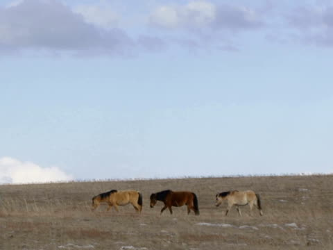 Horses migration Herd of wild horses on pasture. The camera is static, the horses are from right to left. In the 2 shot a lot of sky. mare stock videos & royalty-free footage