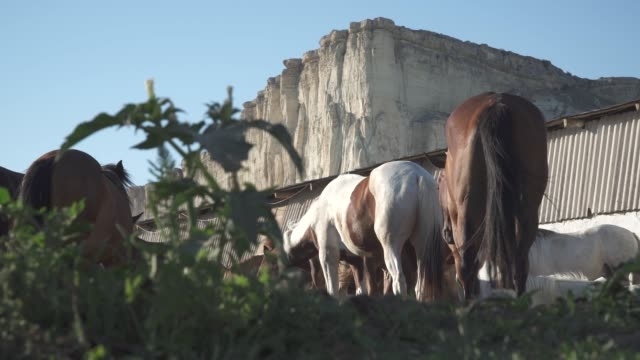 horses on a farm in the mountains and white rock video