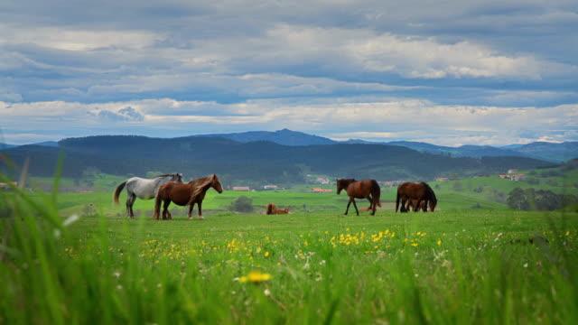 pferde auf grünem gras im hintergrund der berglandschaft - hengst stock-videos und b-roll-filmmaterial