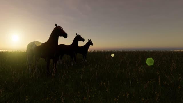 horses on the farm sunrise to rain - скаковая лошадь стоковые видео и кадры b-roll