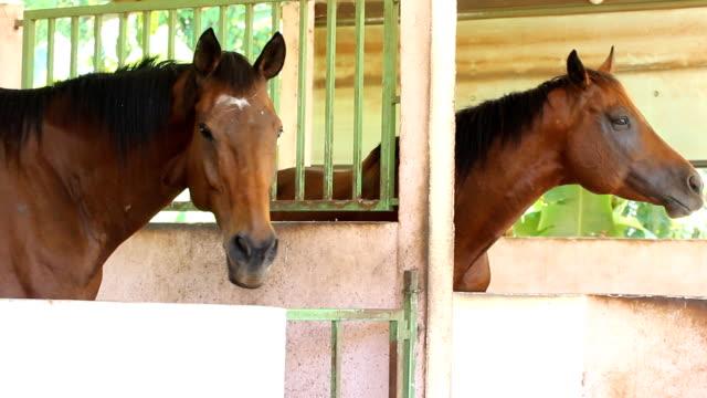 馬の農場 - 2匹点の映像素材/bロール
