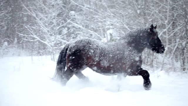 pferde im freien, während der winter schneesturm - hengst stock-videos und b-roll-filmmaterial