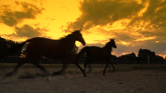 HD SLOW MOTION: Horses Running At Dawn video