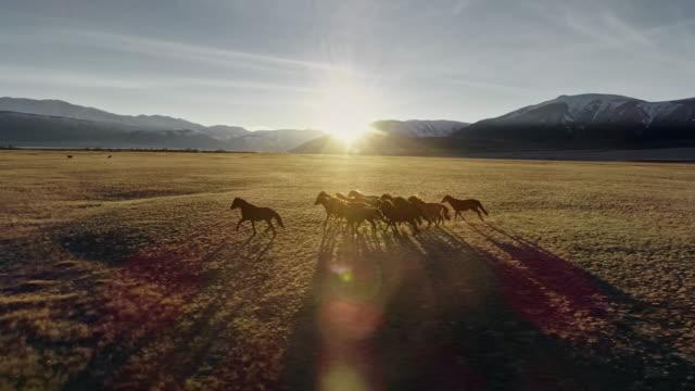 cavalli che corrono liberi nel prato con sfondo di montagna innevato - stallone video stock e b–roll