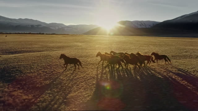horses running free in meadow with snow capped mountain backdrop - mustang video stock e b–roll