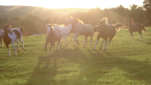 horses running free super slow motioning field at sunset - лошадиные стоковые видео и кадры b-roll