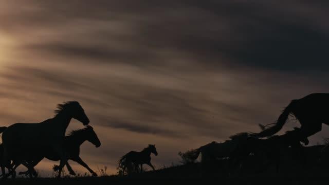 Horses running on a grass field