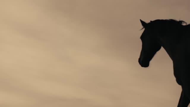 pferde laufen auf einer wiese - pferderennen stock-videos und b-roll-filmmaterial