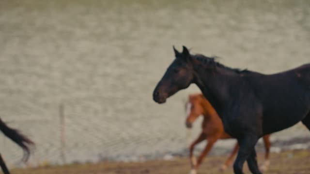 hästar som körs på en gräsplan - hästhoppning bildbanksvideor och videomaterial från bakom kulisserna
