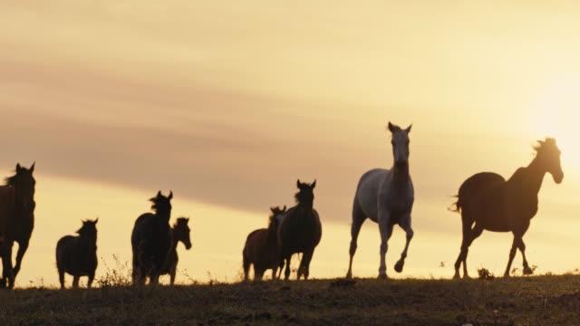 hästar som körs på en gräsplan - häst tävling bildbanksvideor och videomaterial från bakom kulisserna
