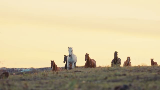 horses running on a grass field - mustang video stock e b–roll