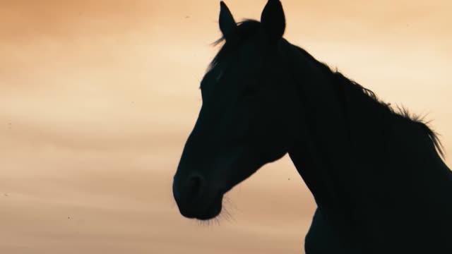 horses running on a grass field - cavalla video stock e b–roll