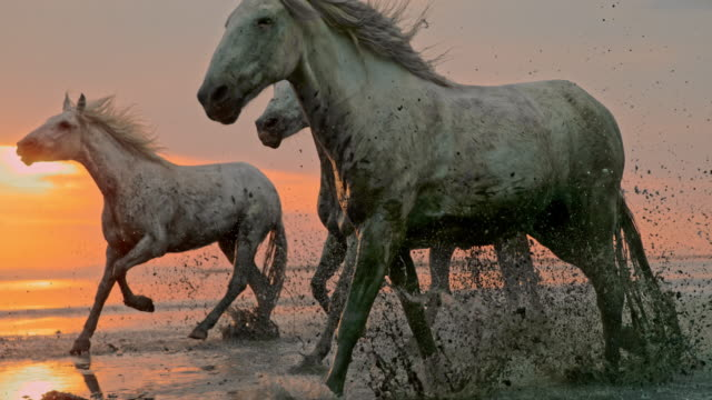 slo mo horses running on the beach at sunset - time warp effect - лошадиные стоковые видео и кадры b-roll
