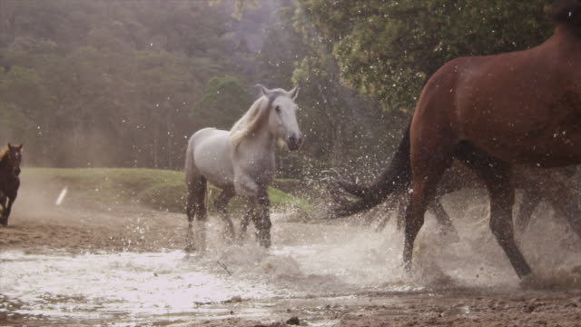 Horses Running Stampede Horses Running Stampede mustang wild horse stock videos & royalty-free footage