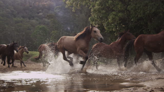 horses running stampede - mustang video stock e b–roll