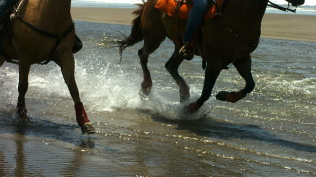 Horses running through water, slow motion video