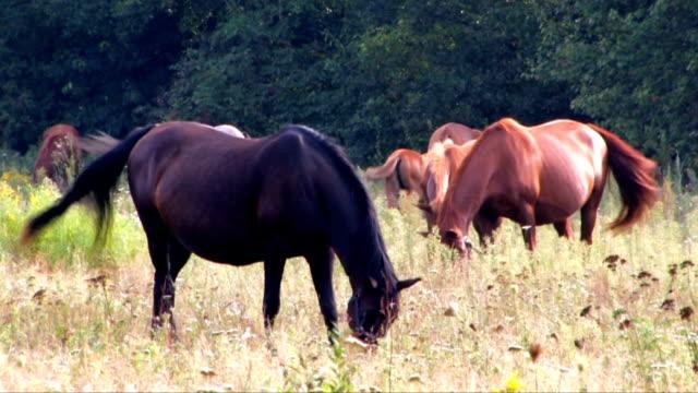 di cavalli - cavalla video stock e b–roll