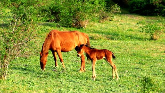Horses. video