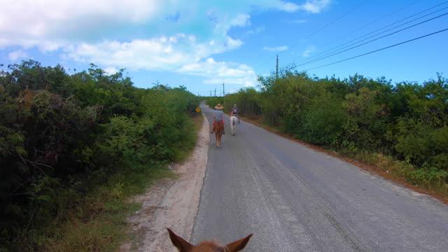 stockvideo's en b-roll-footage met paarden die langs weg van het eiland lopen - providenciales