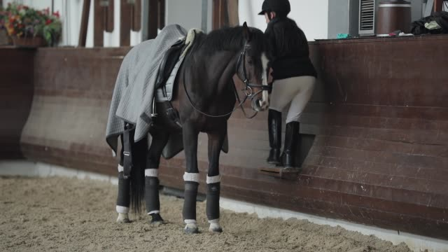 Horsewoman climbs up on horseback in a aviary manege Horsewoman climbs up on horseback in a aviary manege saddle stock videos & royalty-free footage