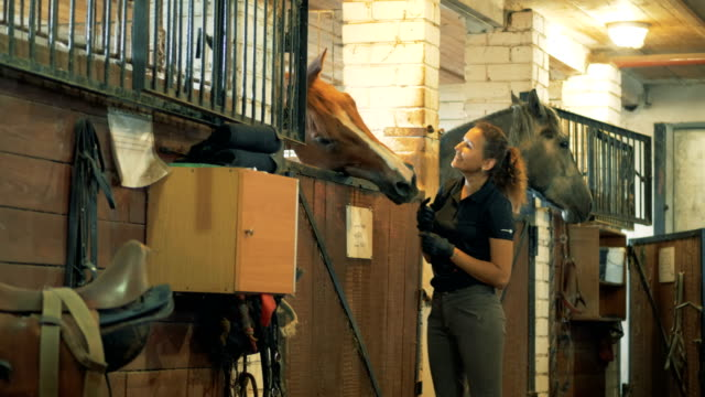horsewoman smiles patting a brown horse in a stable. - video di bancarella video stock e b–roll