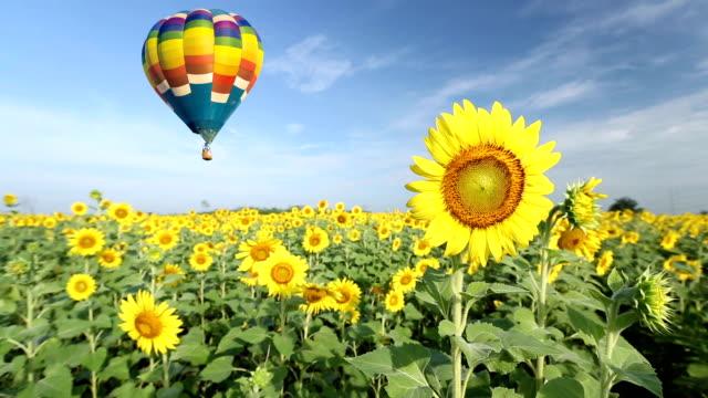 Hot air balloon over sunflower fields video
