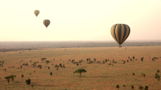 AERIAL: Hot air balloons safari floating high above endless Serengeti plains AERIAL: Tourists floating in hot air balloon safari high above distant savanna plains in amazing African wilderness. Wild zebras gathering in group on the ground at stunning golden light misty morning tanzania stock videos & royalty-free footage