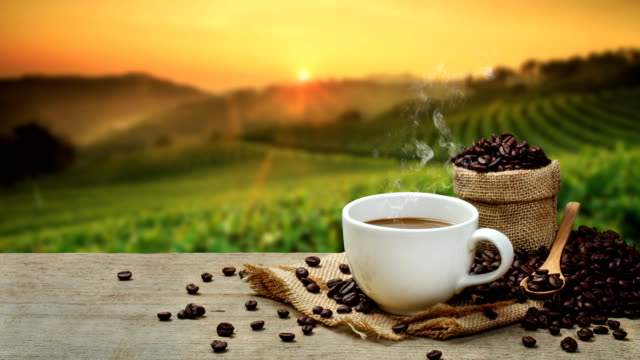 hot coffee cup with coffee beans on the wooden table and the plantations background - piantagione video stock e b–roll