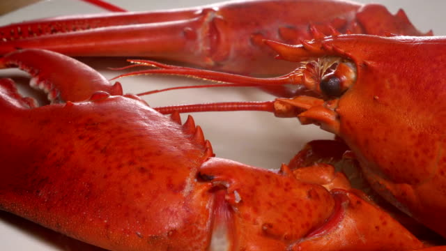 Hot smoking Boiled Lobster Hot smoking Boiled Lobster boiled stock videos & royalty-free footage