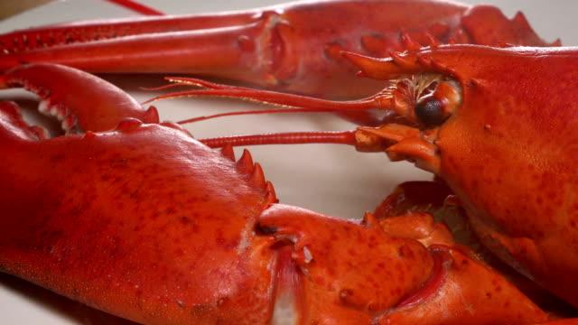 heißrauchende gekochte lobster - gar gekocht stock-videos und b-roll-filmmaterial