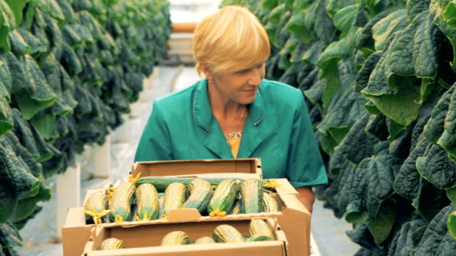 vídeos de stock e filmes b-roll de hothouse employee is looking for mellow cucumbers to harvest - agricultora