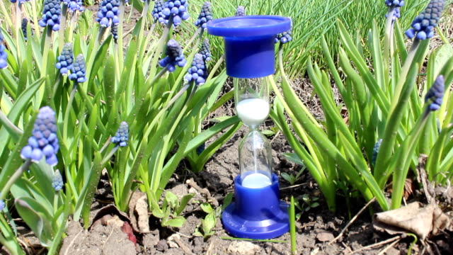 Hourglass in flowers