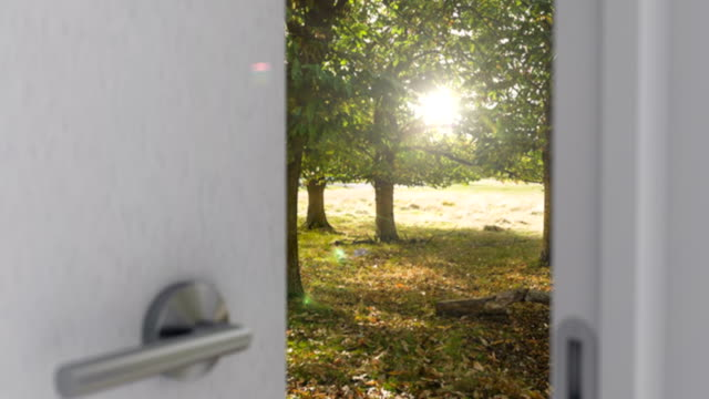 House door opening by handle and the woodland, freedom and rest is behind it video