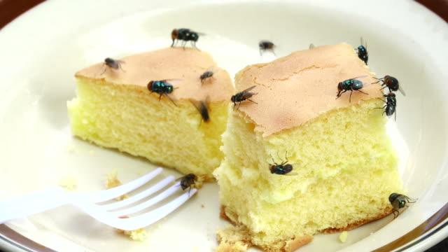 Housefly eating cake
