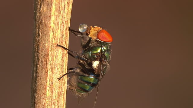 Housefly on a branch