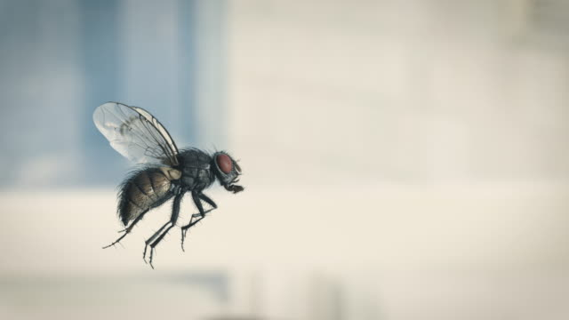 housefly slow motion flying - insetto video stock e b–roll