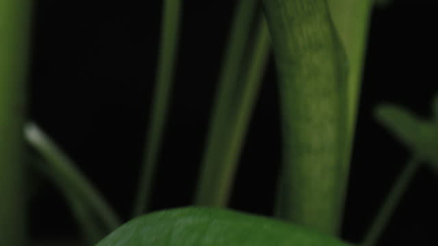 Houseplant preview